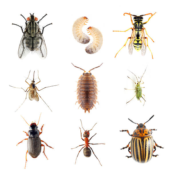 Garden pests. Garden pests. Collection of the insects on a white background. aphid stock pictures, royalty-free photos & images