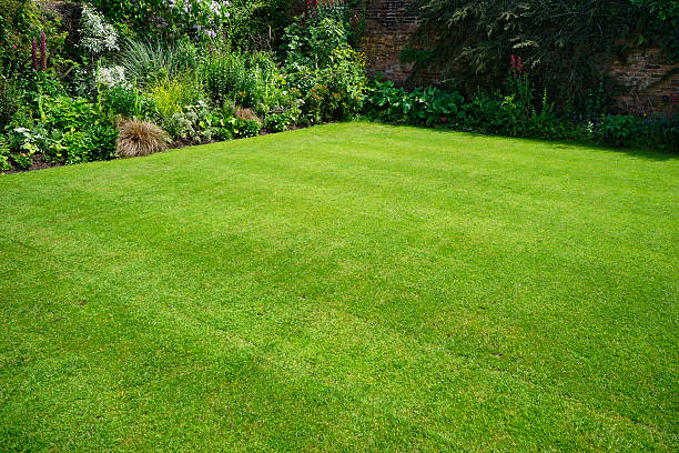 garden a lush english garden in summer lawn stock pictures, royalty-free photos & images