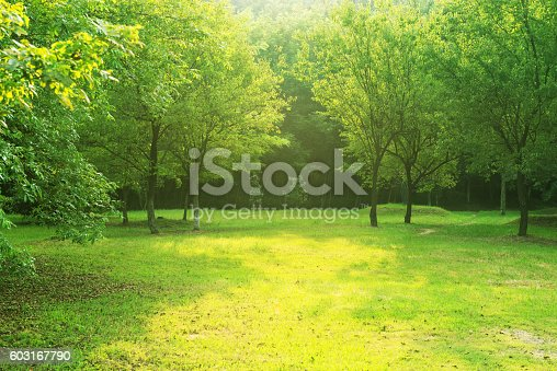 istock Garden 603167790