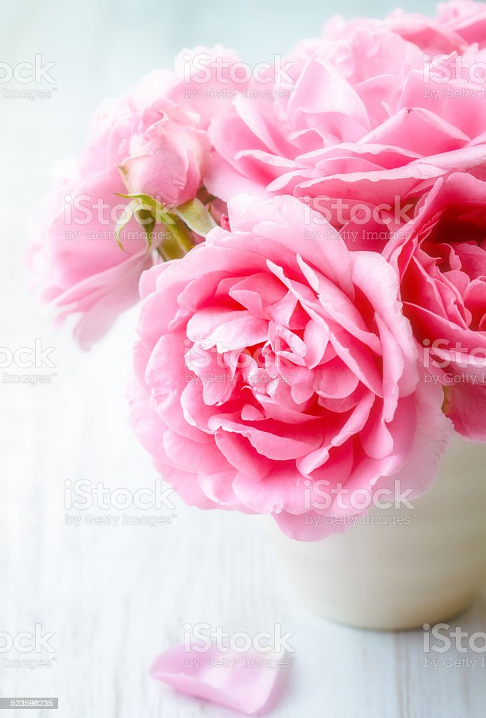 Garden pink roses stock photo