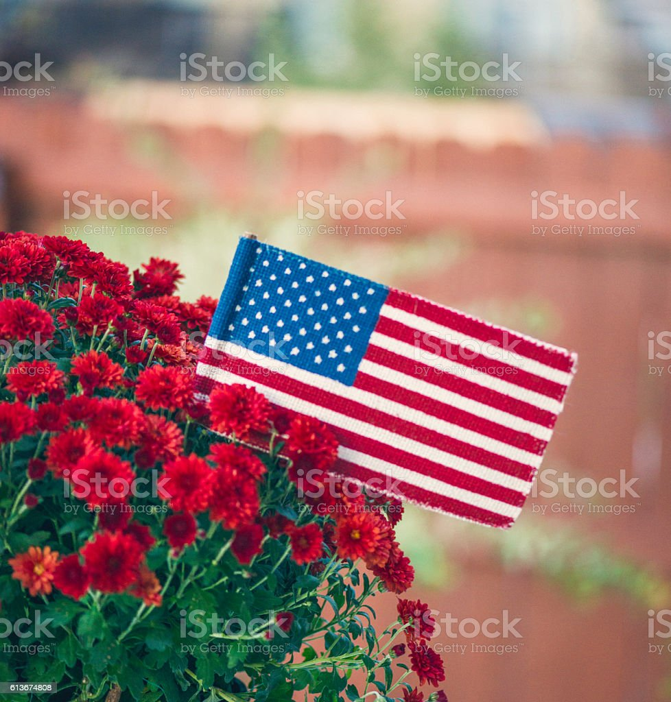 Garden planter with chrysanthemums and US flag for American holidays stock photo