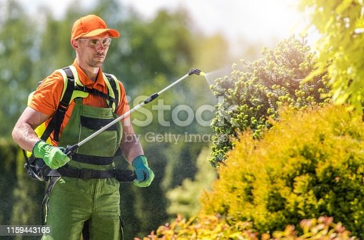 Garden Plants Insecticide by Caucasian Professional Gardener. Spring Time Backyard Maintenance.