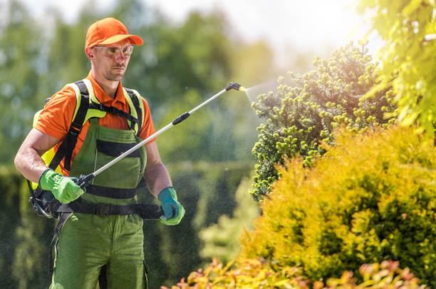 garden plants insecticide - attrezzatura per la disinfestazione foto e immagini stock