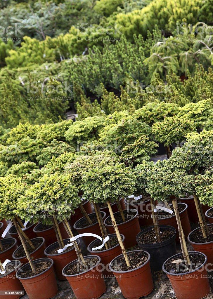 Garden plants nursery stock photo
