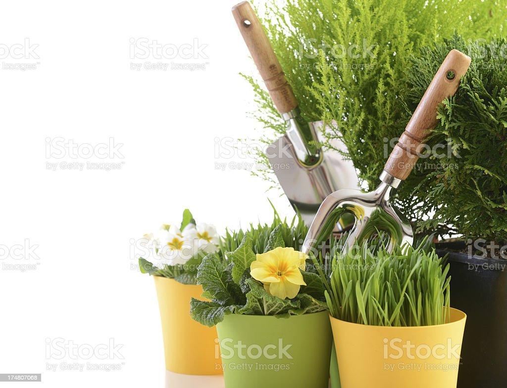 garden plants royalty-free stock photo