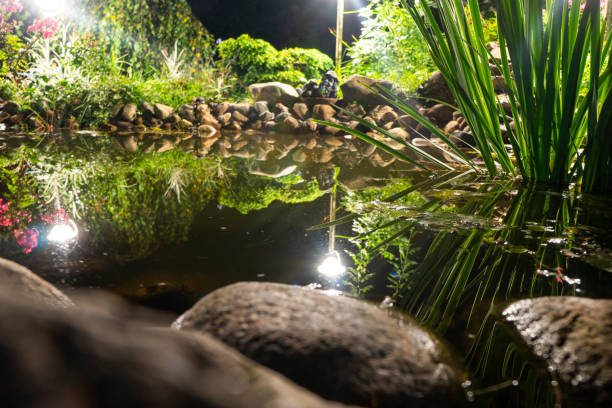 Garden pond at night. Illuminated pond shore in a night. Garden fish pond. Garden pond on natural landscape. Water garden natural pool. Exterior of a private garden. Pond with rocks and plants stock photo