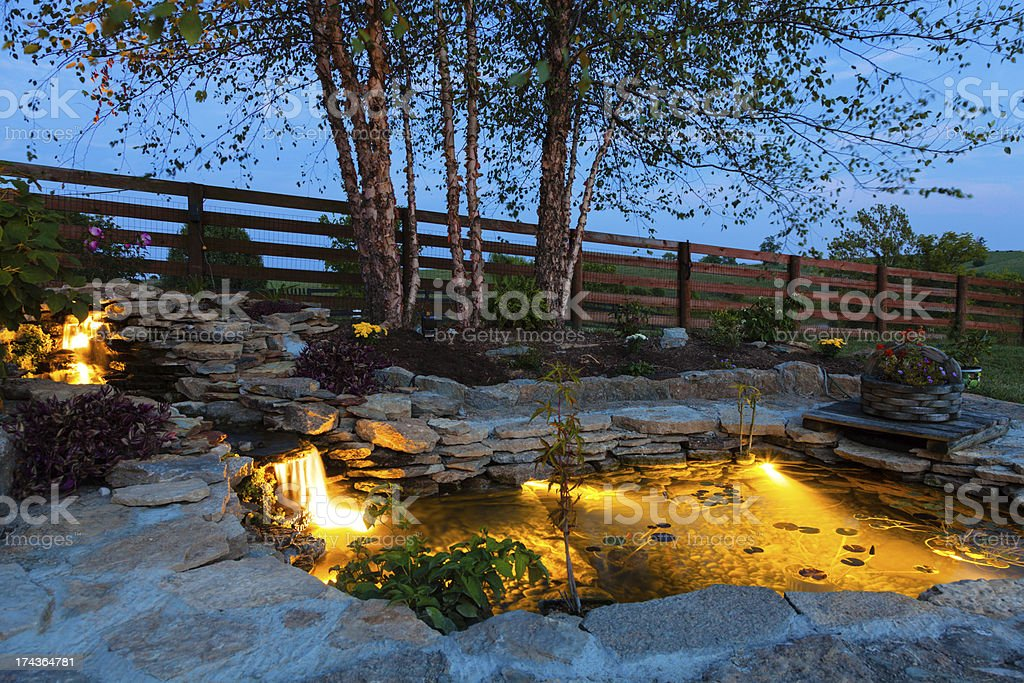Garden Pond Stock Photo More Pictures Of Aquatic
