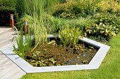 gardener with straw hat cleans pond with a net, swimming pond with flowering shore planting and field stones in the background