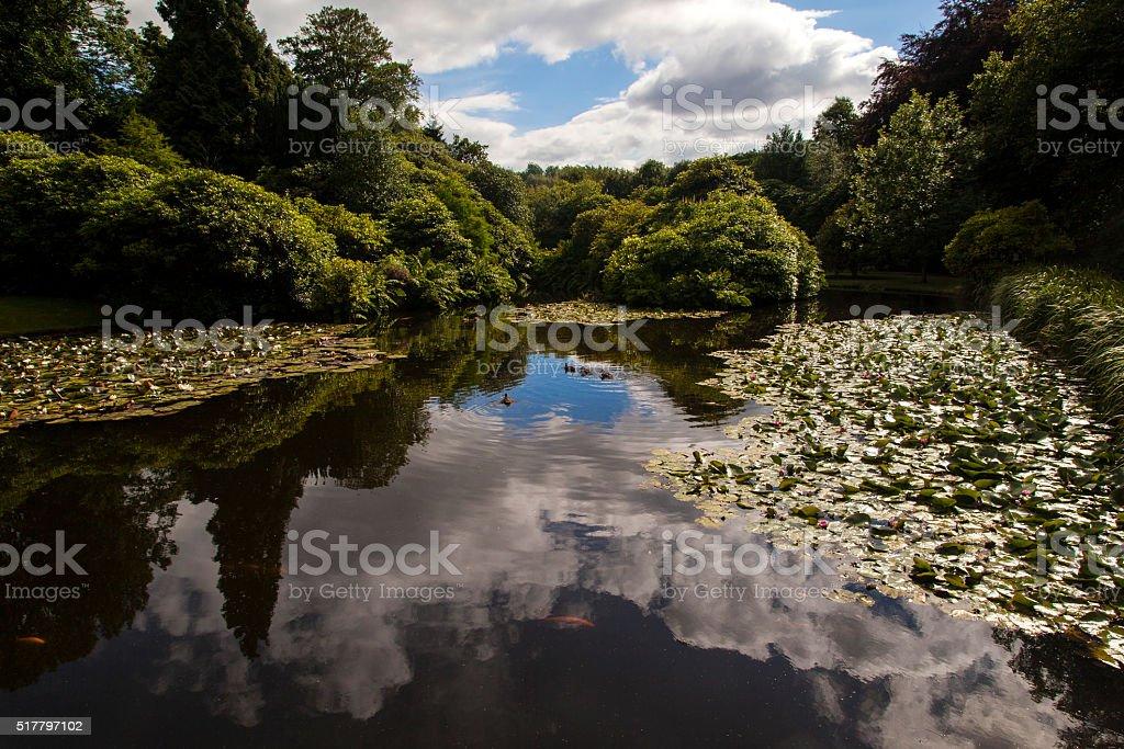 Garden Pond Reflection stock photo