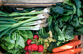Garden produce and harvested vegetable. Fresh farm vegetables in wooden box. Organic food