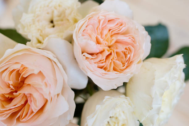 Garden rose david ostin rose picture id991971852?b=1&k=6&m=991971852&s=612x612&w=0&h=o8omxbsy742kky1kptbhasosemeajiiv2uxq6epgyfi=