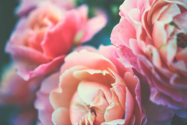 Rosé jardin - Photo