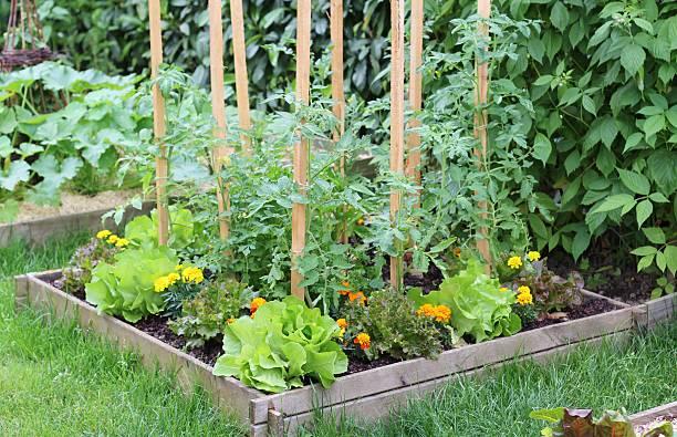 Garden, salad, spring, plantation stock photo