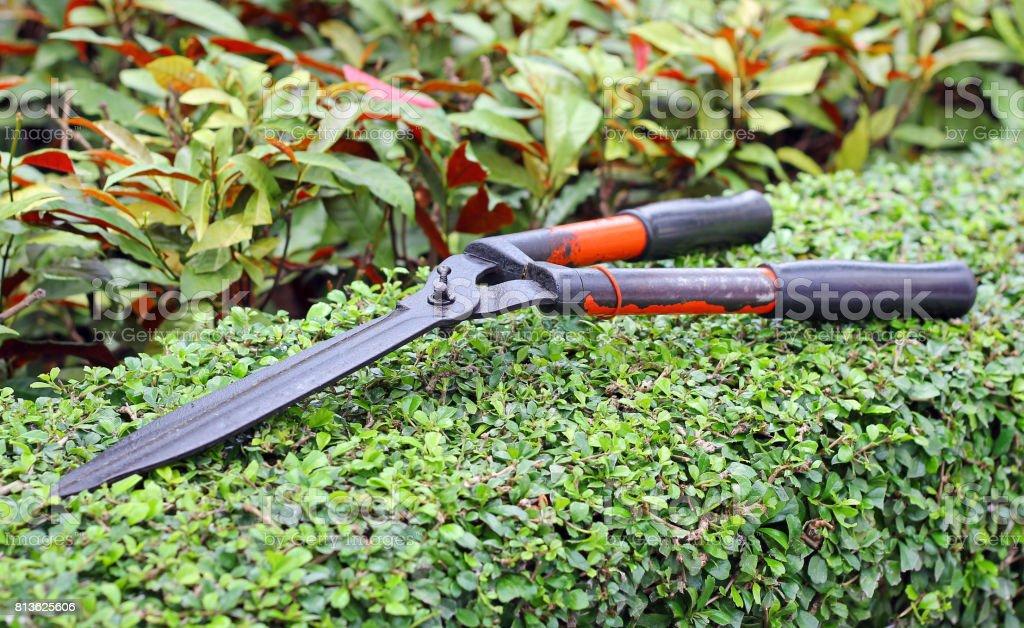 Garden shears on tree. stock photo