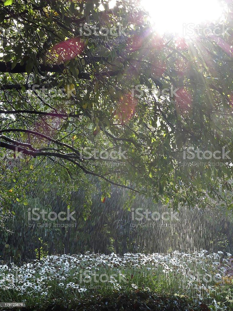 Garden shower royalty-free stock photo