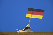 Garden Snail Carrying German Flag On Blue Background