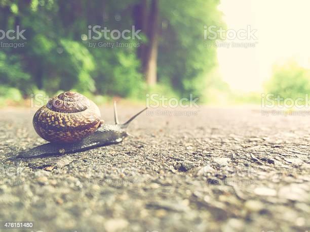 Garden snail comes their way picture id476151480?b=1&k=6&m=476151480&s=612x612&h=tbo09 z0ut jinncutgp uq070mc 77hti9b1pvhvv8=