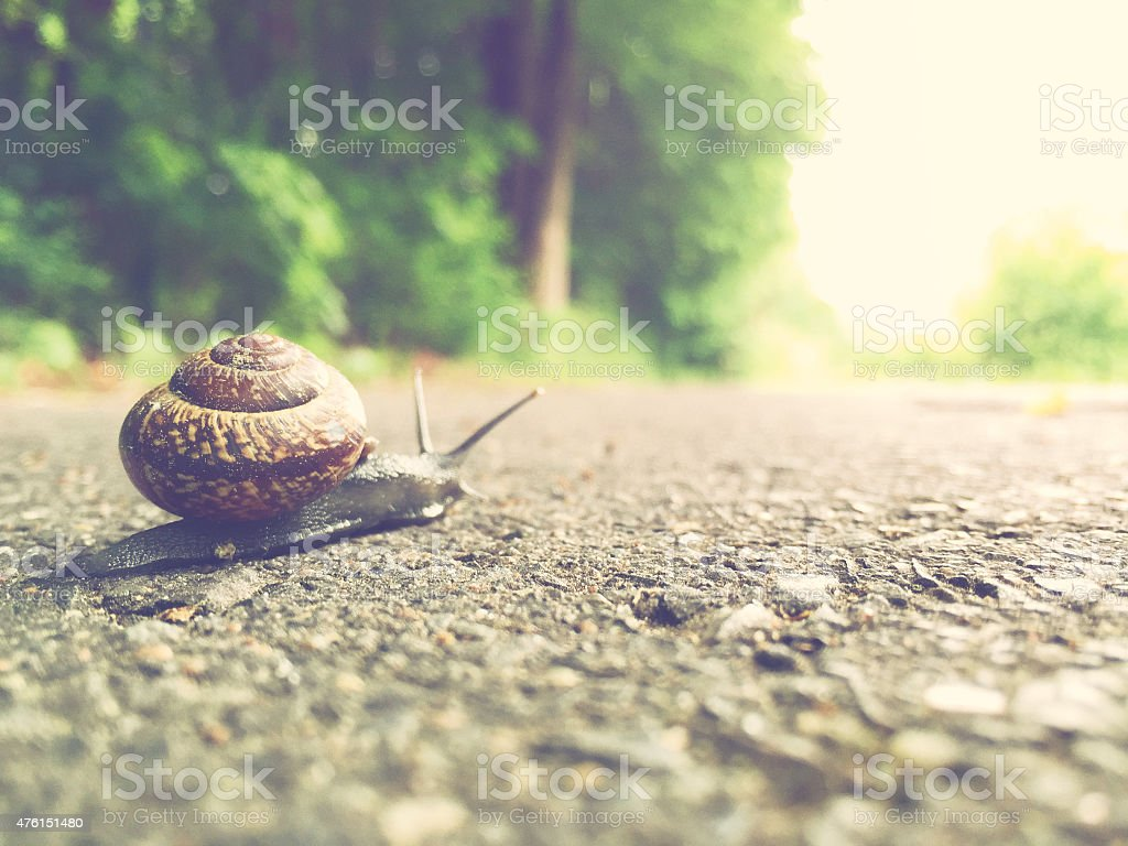 Garden snail comes their way stock photo