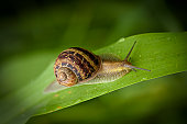 istock garden snail crawling 157617604
