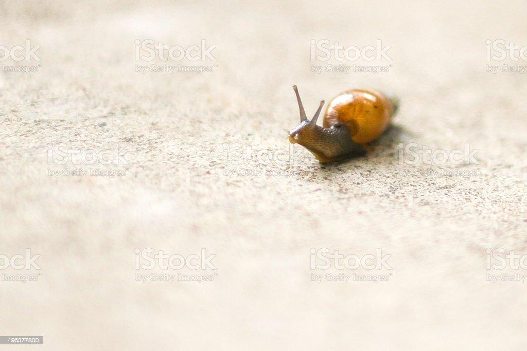 Garden Snail on Patio - Stock Image stock photo