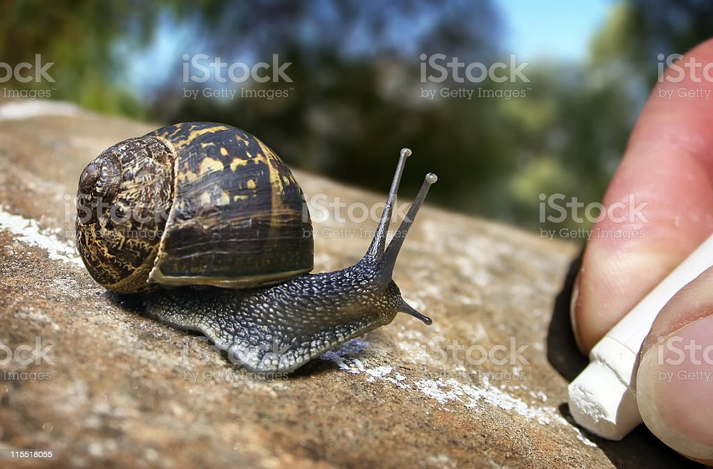 Garden Snail Trail stock photo