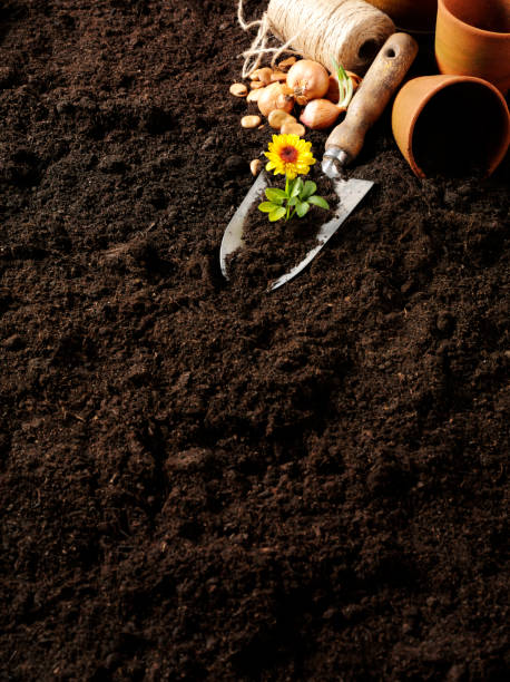 Garden Soil and Gadening Plant Pots Copy space on garden soil with a corner of gardening equipment and bulbs.Click on the link below to see more of my nature and business images. potting stock pictures, royalty-free photos & images