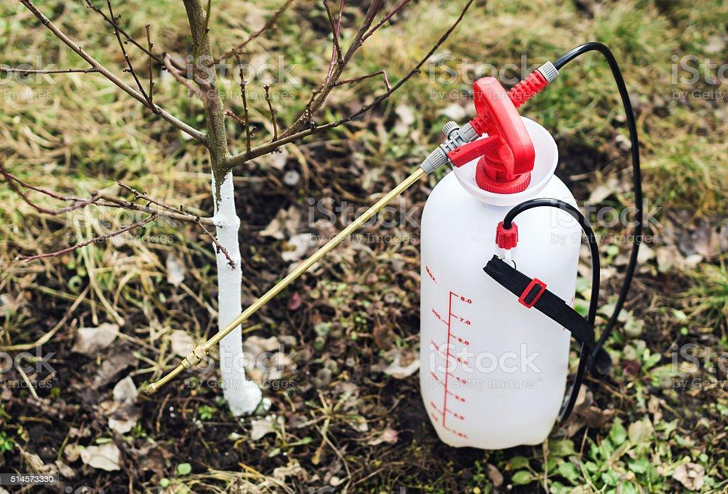 Garden sprayer and a young fruit tree stock photo