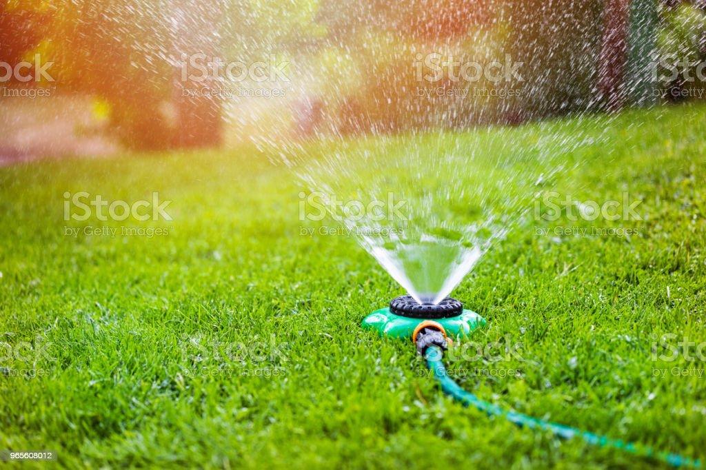 garden sprinkler watering grass at home backyard