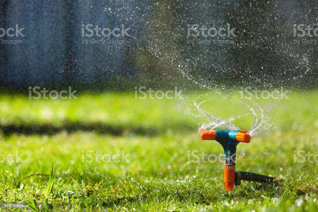 Arroseur de jardin arrosage gazon photo libre de droits