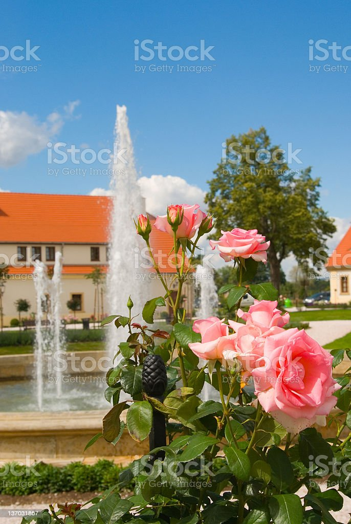Garden Stake and rose royalty-free stock photo