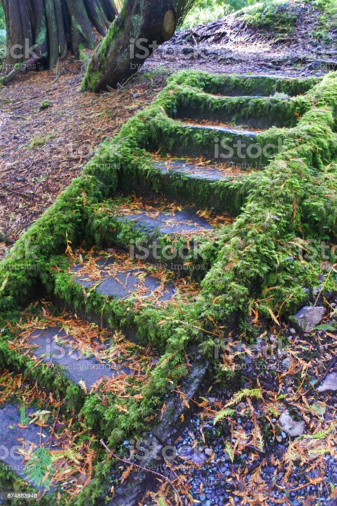 Garden Steps stock photo
