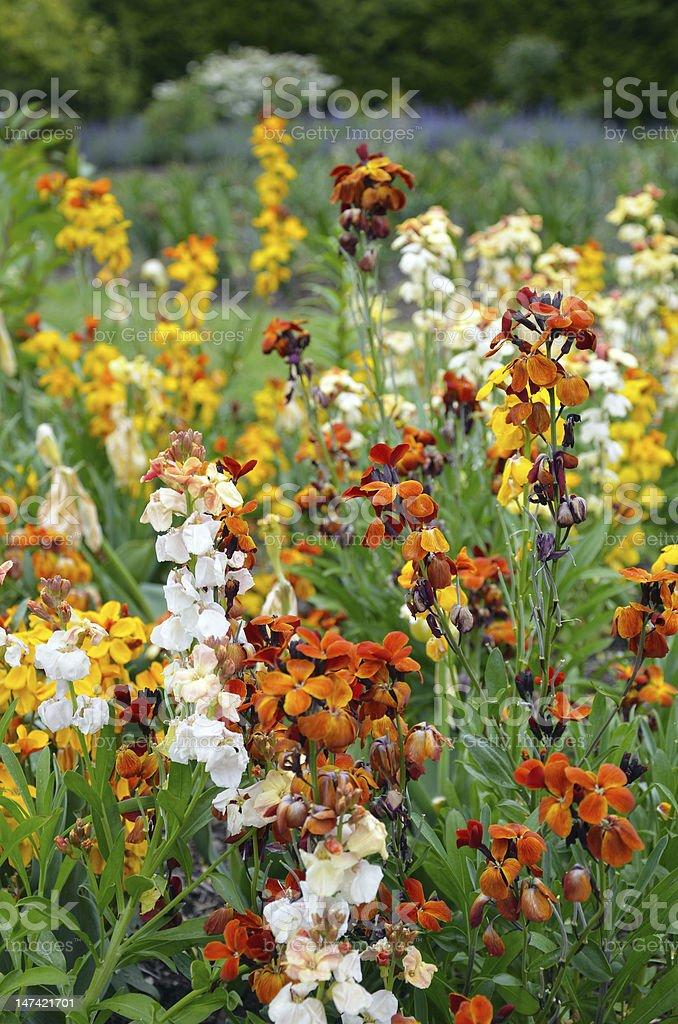 Garden stock flowers royalty-free stock photo