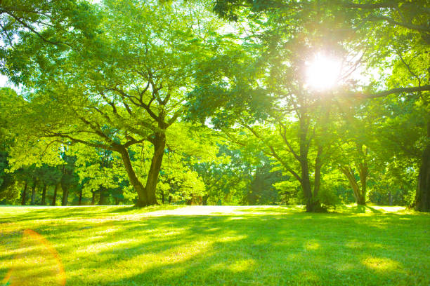 garden sunlight - public park stock photos and pictures