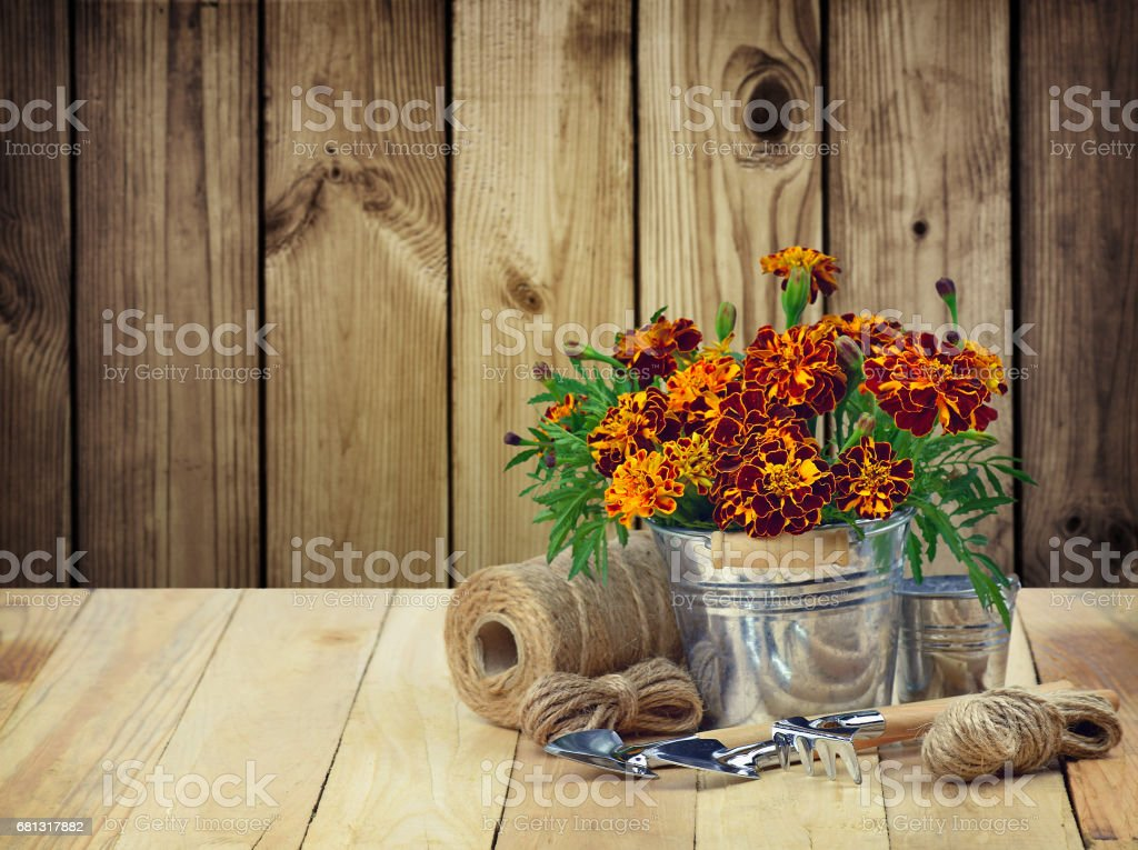 A garden tool and a bunch of marigolds .Gardening. stock photo