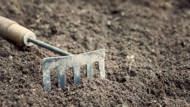 Garden tool. Dirty rake in the background soil. Background in blur. Horizontal shot of Garden tool. Dirty rake in the background soil. Background in blur. garden hoe stock pictures, royalty-free photos & images