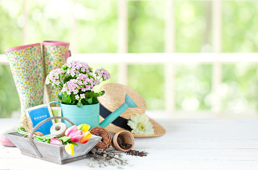 Vintage gardening tools and flowers against a bright window in springtime