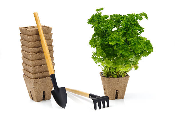 Garden tools with green plant in pot stock photo