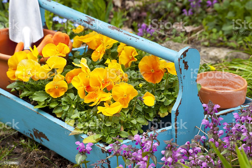 Garden Tray stock photo