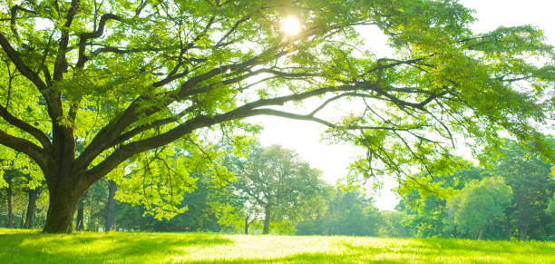 花園樹 - 非都市風光 個照片及圖片檔