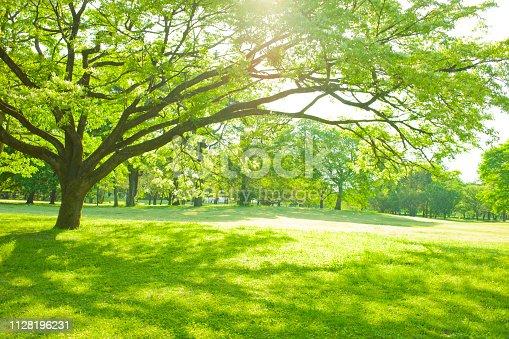 istock garden tree sunlight 1128196231