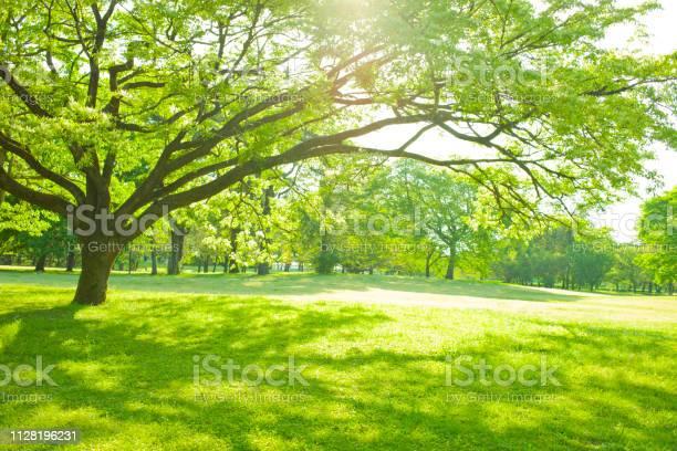 Garden tree sunlight picture id1128196231?b=1&k=6&m=1128196231&s=612x612&h=dec0jlprhckybxpt55utfpb 7vjgrjydr8qnkchwfae=