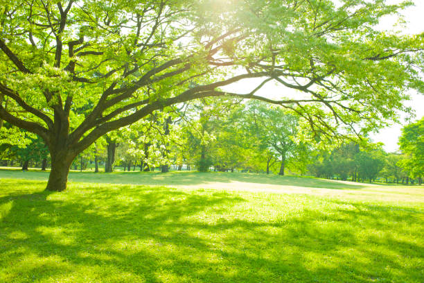 garden tree sunlight Sunny park grass area stock pictures, royalty-free photos & images