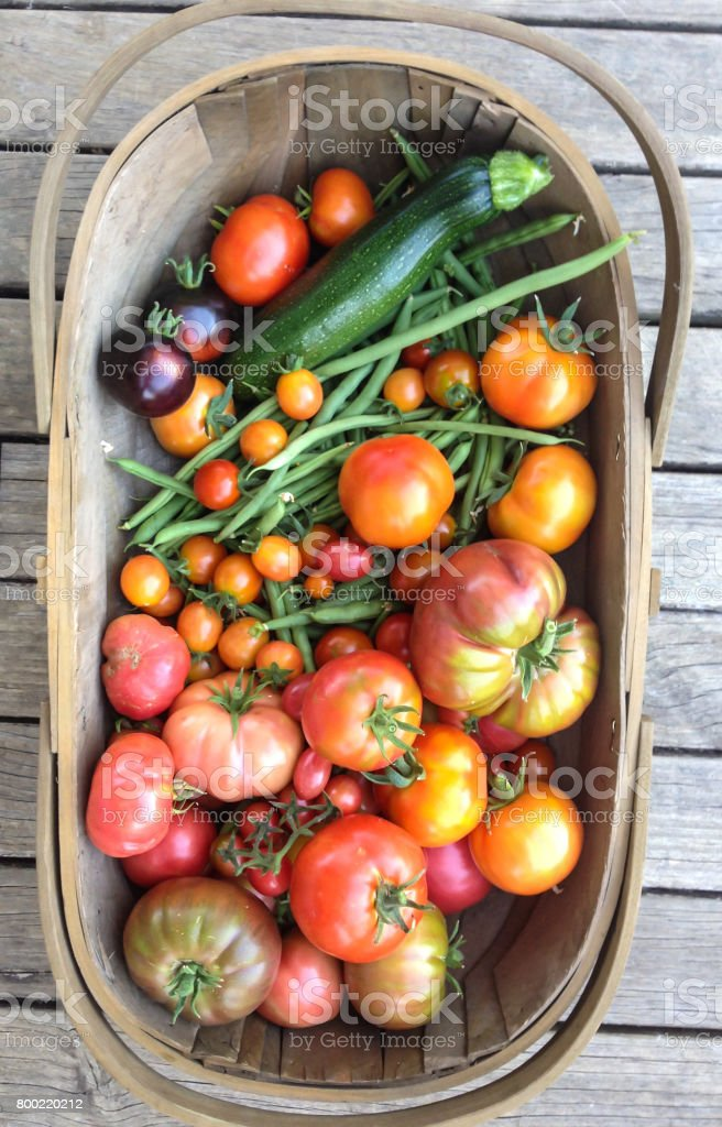 Garden trug harvest basket with homegrown vegetables, tomatoes, beans, zucchini stock photo