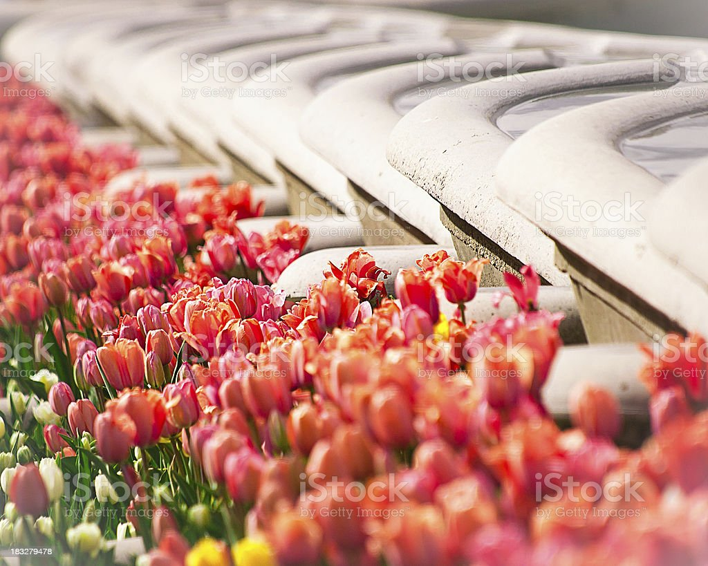 Garden Tub Fountains and Tulips royalty-free stock photo
