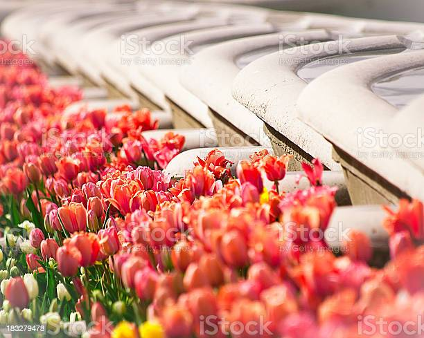 Photo of Garden Tub Fountains and Tulips