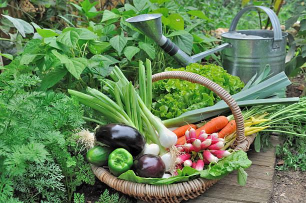 Vegetales de jardín - foto de stock
