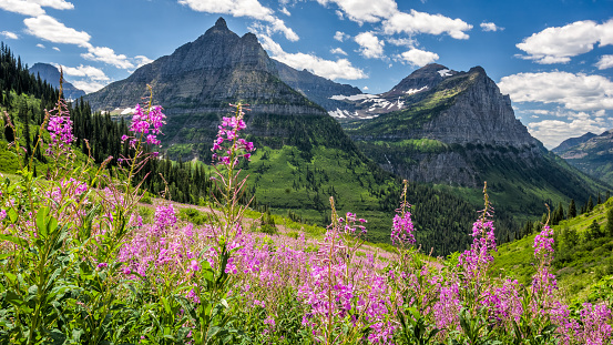 Garden Wall In Glacier National Park Stock Photo - Download Image Now