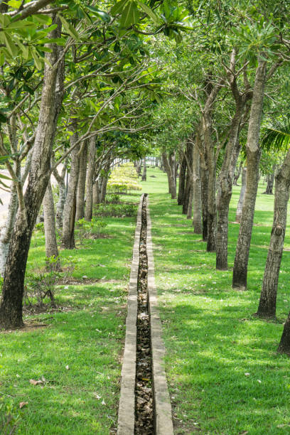 Garden way path with Rainwater drain in Public Park stock photo