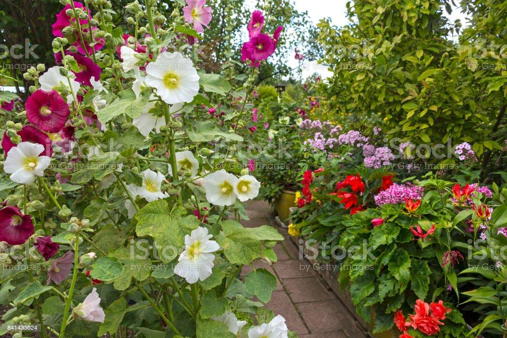Garten mit blühenden Malven und phlox – Foto