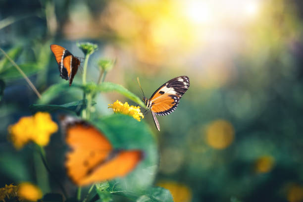 garden with butterflies - borchee stock pictures, royalty-free photos & images